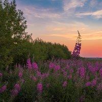 Тёплые краски летнего вечера. :: Pavel Vasilev