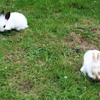 белые кролики :: Любовь ***
