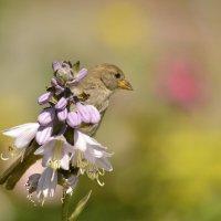 Цветок :: Солоненко Лидия