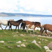 Лошадь :: lyalla k