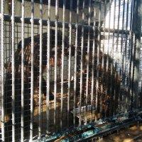 Зоопарк медведи Луганск :: Наталья (ShadeNataly) Мельник