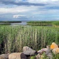 Чудское озеро :: veera (veerra)
