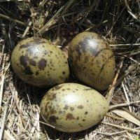 Гнездо чайки :: Anna Ivanova