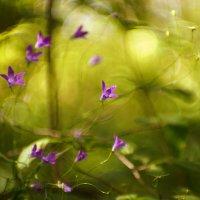 Цветики :: sorovey Sol