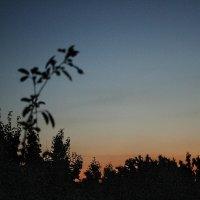 ...В час заката... :: barsuk lesnoi