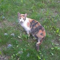 Кошка, которая приносит счастье :: Елена Павлова (Смолова)