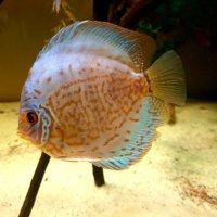 Рыбка :: Елена П