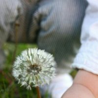 Цветы этого лета))) :: Борис