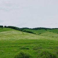 июнь, предгорья :: nataly-teplyakov