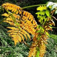 Уже в лесах желтеет лист . :: Мила Бовкун