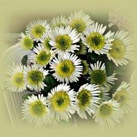 Хризантемы. :: Валерия Комова