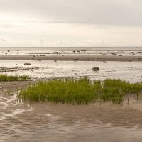 Белое море отлив воды. :: Марина Никулина