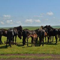 На лугу пасутся кони.... :: Клара