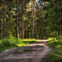 Лесными дорогами :: Алексей (GraAl)