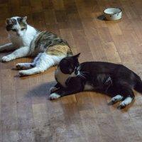 Кошачья семья. :: Яков Реймер