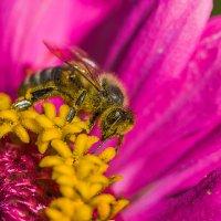 Труд пчелы :: Максим Иванов