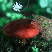 лесной житель :: Alexandra