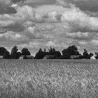 Пшеничная деревня перед грозой :: M Marikfoto