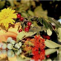 Созрели вишни в саду.. :: Александр Шимохин