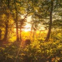Утро в Горном Луче :: Геннадий Клевцов