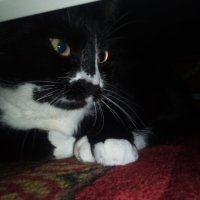 С днём кошек. :: Серж Поветкин