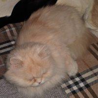 К международному дню кошек . :: Венера Чуйкова