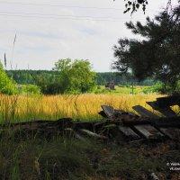 Церковь. Вид с дороги за деревней. :: Сергей Воинков