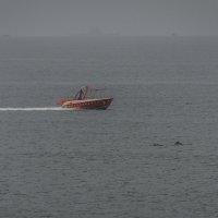 Дельфины :: Виталий Кулешов (kadet.www)