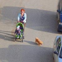 Семейство на прогулке :) ... (и верный друг всегда рядом) ) :: Елена Хайдукова  ( Elena Fly )