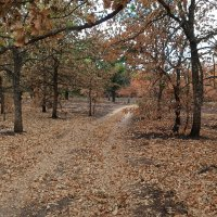 Осенний пейзаж в июле :: Gen Vel