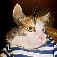 Ко Дню ВДВ готова!! :: Milocs Морозова Людмила