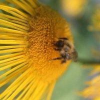 пчела :: maikl falkon