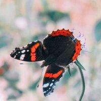 Butterfly :: Виктория Писаренко