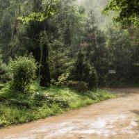 Летний дождь :: Ольга
