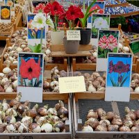 Bloemenmarkt Цветочный рынок Амстердам Нидерланды :: Alm Lana