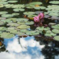В ботаническом саду :: Ольга