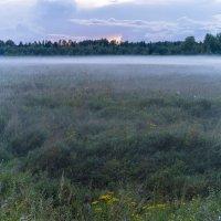 Августовский вечерний туман :: Арина
