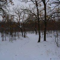 Шахты. Первый снег в лесу мкр. ХБК. :: Пётр Чернега