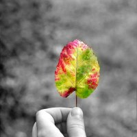 Осенний светофор :: Любовь Р