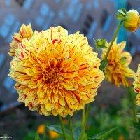 Не найдешь горделивей цветка. :: Андрей Иванович (Aivanovich-2009)