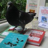 День знаний: голубь, познав новое, чувствует себя орлом... :: Alex Aro Aro Алексей Арошенко