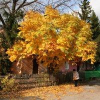 Осень :: Владимир Помазан