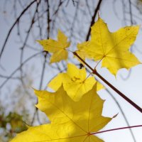 Осень :: kichuck viktor