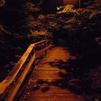 Мост в Воробьёвию :: Андрей Солан