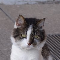 кот из Петропавловской крепости :: Sabina