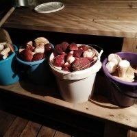 Удачная поездка в лес за белыми грибами :: Татьяна Любимова