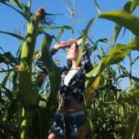 В кукурузном поле :: Евгений Князев