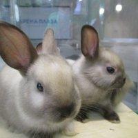 Кролики-малыши. :: Зинаида