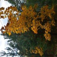 Осенний лес :: Yulia Raspopova
