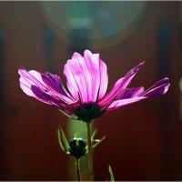 Свет и цвет.. :: Александр Шимохин